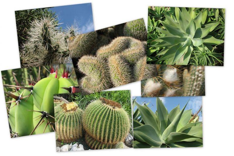 Les plantes dépolluantes, un must have dans votre appartement dans Les trouvailles plante