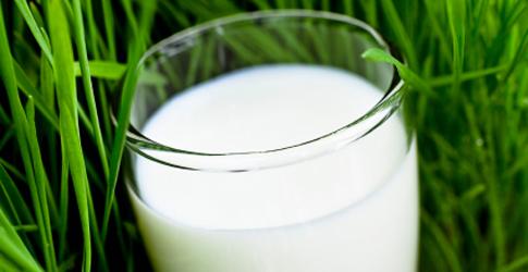 Les produits laitiers, des sensations pures ? dans Les masques produitslaitiers1
